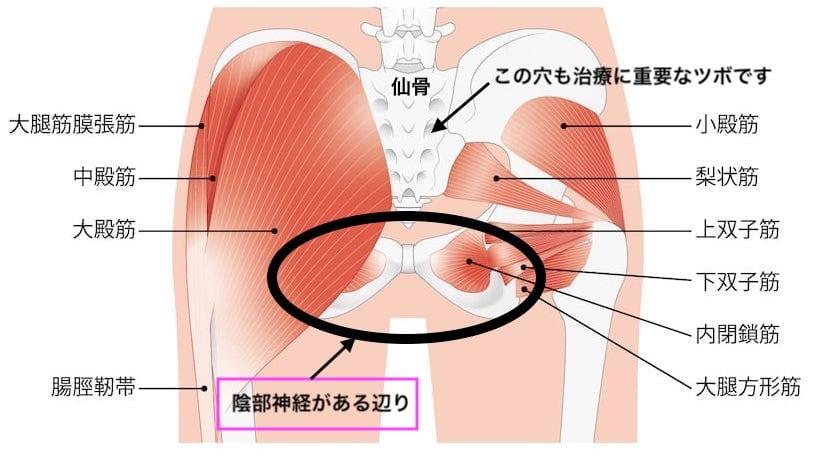 お尻の解剖図